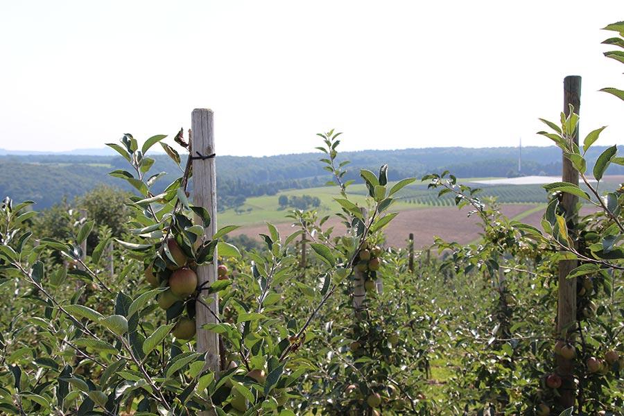 Aussicht Apfelplantage