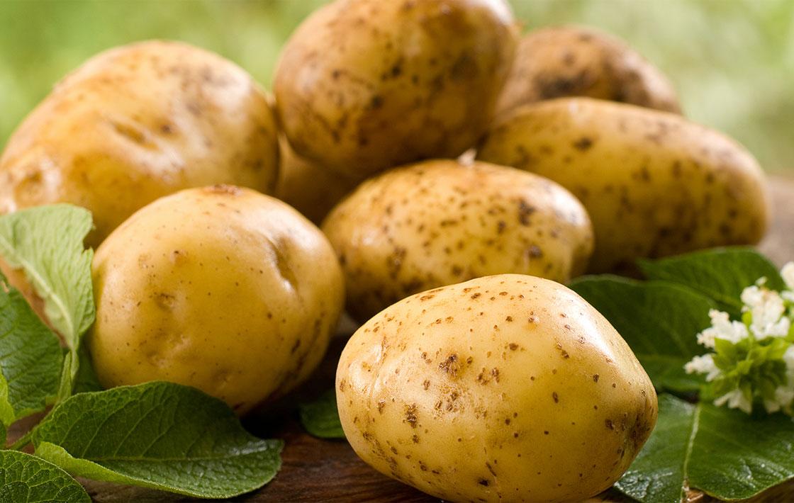 Kartoffelaussaat Meyerhof