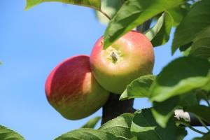 Apfel Sunrise