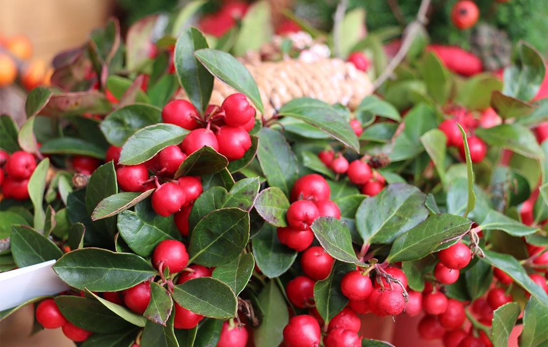 Blumen Marktscheune Beeren
